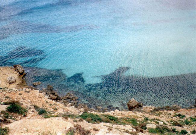 Lampedusa, alla scoperta dell'isola delle tartarughe