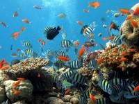 Mar Rosso, la magia di un deserto senza fine