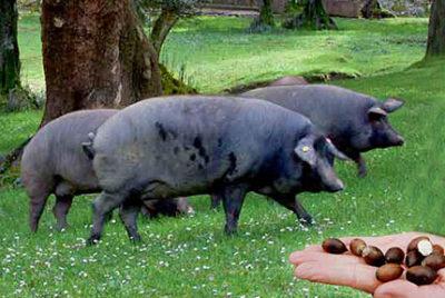 jambon cerdo_al pascolo