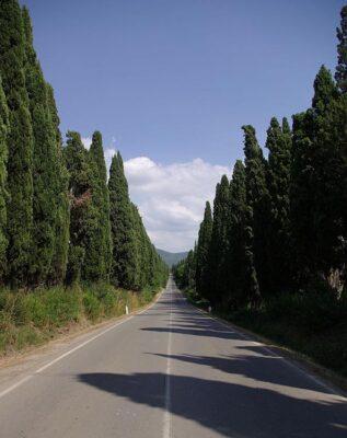 Costa Etrusca Bolgheri Viale dei Cipressi_001