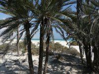 Soqotra, l'isola dell'incenso