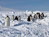 Antartide, il viaggio della vita
