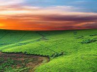"""Future Harvest per i """"raccolti"""" del futuro"""
