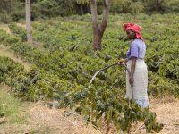 Agricoltura: l'attività mondiale di Future Harvest