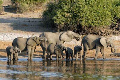Botswana-Foto di Herbert Bieser