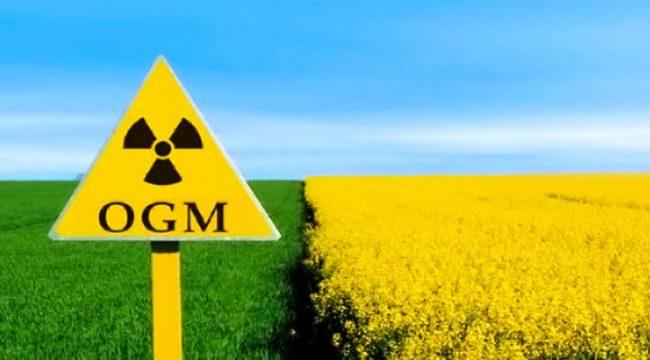 OGM: speranze e paure del nuovo millennio