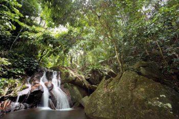 Tioman-giungla