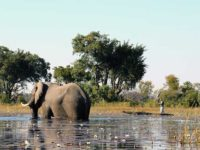 Okavango foto Hp.Baumeler