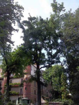 L orto botanico braidense a milano un oasi di pace in for Giardino botanico milano