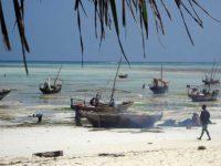 Zanzibar, l'isola dei buongustai