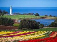 Tasmania a colori