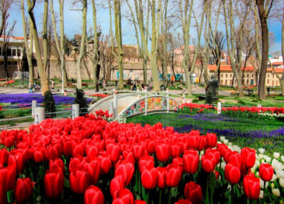 Festival-tulipani