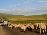 Armenia greggi di pecore lungo la strada (ph. Mario Negri © Mondointasca.it)