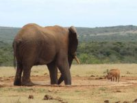 Shamwari: animali in libertà e scuola di vita
