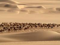 Azalai, le ultime carovane del deserto