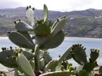 "Pantelleria, un'isola ""diversa"""