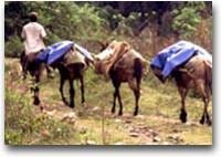 Agriturismo alla cubana