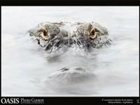 Fotografia Naturalistica: Natura spettacolare in uno scatto