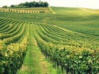 Alla scoperta del Brasile, dalla Terra del Vino a Florianopolis