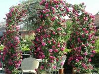 Bologna ospita Country Rose: mostra mercato sulle rose
