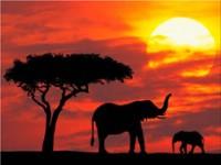 Soffre il turismo mondiale