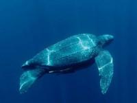 Malesia, tartarughe marine e i misteri della vita