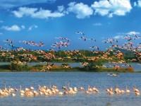 Parco del Delta del Po è Patrimonio dell'Umanità Unesco