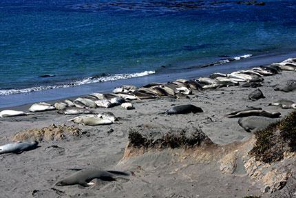 California: la penisola di Monterey