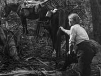 Alice Manfield, la Guida Escursionista in pantaloni