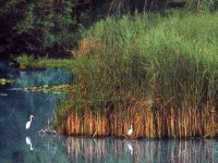 Argenta: il suo territorio, le oasi, l'ecomuseo