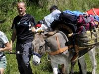 Alla conquista delle Alpi con gli asinelli
