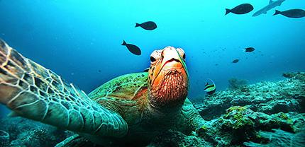 Biodiversità, un patrimonio fragile e prezioso
