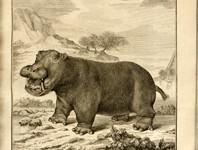 In rete i libri della British Library