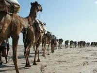 La carovana del sale, in viaggio con i tuareg