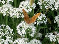 La farfalla e il giardino magico dei bambini