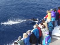 Sulle rotte dei cetacei. Prima che sia troppo tardi