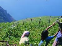 Escursioni guidate nel Parco delle Cinque Terre
