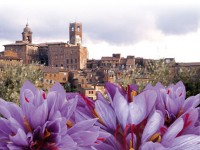 Città della Pieve: itinerario allo zafferano