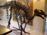 L'uomo che sussurrava al dinosauro