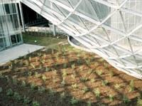 Verde e sostenibilità ambientale nel progettto Fuksas