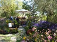 """Giro dell'Italia """"verde"""" tra bonsai, fiori e frutti rari"""