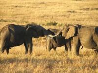 Kenya: investimenti per rilanciare il turismo