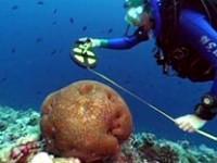 L'università di Bologna studia i coralli delle Maldive