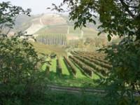 Il Monferrato vuole diventare Patrimonio Unesco