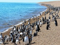 Patagonia: Puerto Madryn e la Penisola Valdes