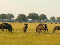 Safari nello Zimbabwe autentico con Imvelo Safari Lodges