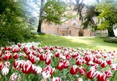 La primavera quest'anno arriva con Messer Tulipano