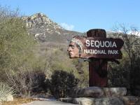 California, la terra delle sequoie giganti