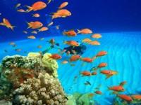 La Farnesina sconsiglia i viaggi a Sharm el Sheik