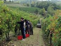 Vino e Turismo: corso di formazione in Piemonte